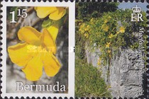 [Flowers - Bermuda in Bloom, Typ AKS]