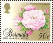 [Old Garden Roses, Typ PQ]