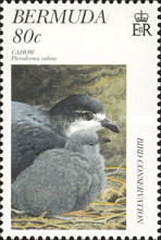 [Bird Conservation, Typ WH]