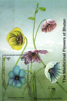 [Medicinal Flowers - Designs showing varieties of the Asiatic Poppy, Typ ]