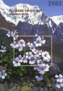 [Flowers of the Himalayan Mountains, Typ ]