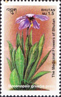 [Medicinal Flowers - Designs showing varieties of the Asiatic Poppy, Typ BDV]