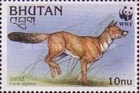 [Endangered Species - Dhole, Typ BLR]