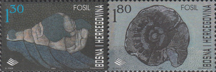 [Fossils, Typ ]