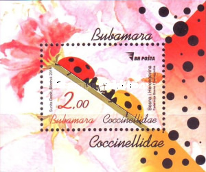 [Insects - Lady Bugs, Typ ]