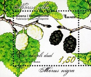 [Flora - White and Black Mulberry, Typ ]
