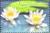 [Water Lily, Typ RV]