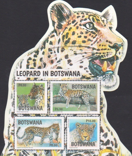 [Leopards of Botswana, type ]