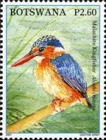 [Birds - Kingfishers of Botswana, Typ AFG]