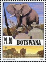 [Elephants in Botswana, Typ AGP]