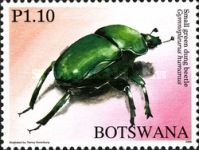 [Beetles of Botswana, Typ AHD]