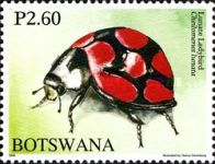 [Beetles of Botswana, Typ AHE]