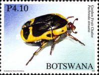 [Beetles of Botswana, Typ AHF]