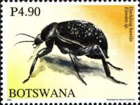 [Beetles of Botswana, Typ AHG]