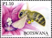 [Honey Bees of Botswana, Typ AHT]