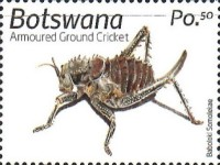 [Insects of Botswana, type AOU]