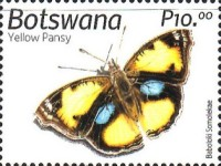 [Insects of Botswana, Typ AOZ]