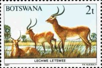 [Animals of Botswana, Typ ON]