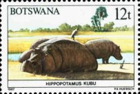 [Animals of Botswana, type OU]