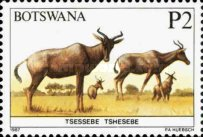 [Animals of Botswana, type PD]