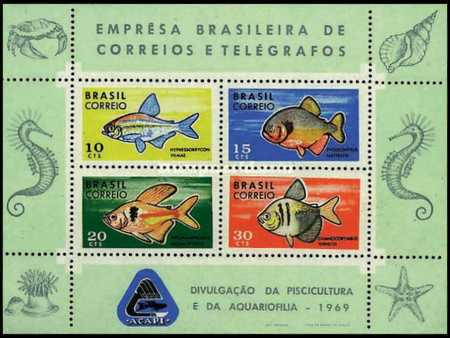 [ACAPI Fish Conservation and Development Campaign, type ]
