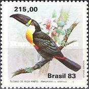 [Toucans, type BVK]