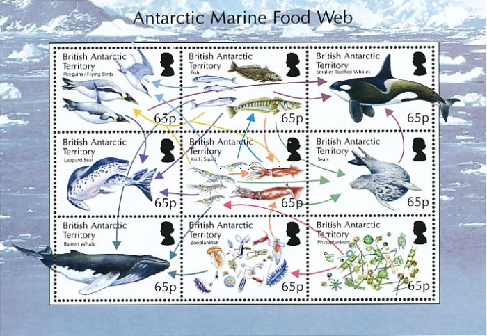 [The Antarctic Marine Food Web, Typ ]