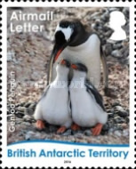 [Birds - Life Cycle of the Gentoo Penguin, Typ ABJ]
