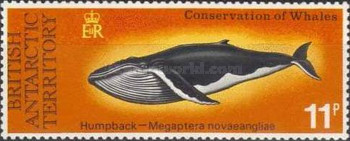 [Conservation of Whales, Typ AZ]