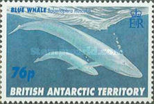 [Whales, Typ IL]