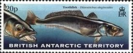 [Fish of the Antarctic Waters, Typ LC]