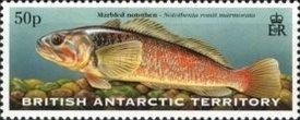 [Fish of the Antarctic Waters, Typ LE]