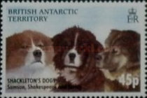 [Dogs of Sir Ernest Shackleton, Typ QB]