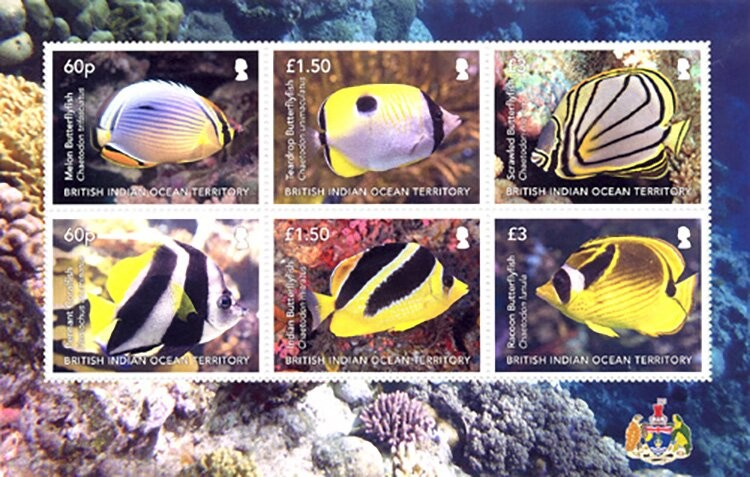 [Marine Life - Butterfly Fish, type ]