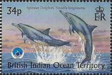 [Whales & Dolphins - International Year of the Ocean, Typ HC]