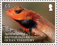[Lizards of the British Indian Ocean Territory, type WM]