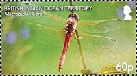[Insects - Dragonflies, type WO]