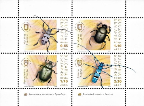 [Protected Insects - Beetles, type ]