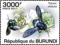 [Insects - Bees, Typ BKQ]