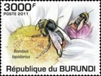[Insects - Bees, Typ BKR]