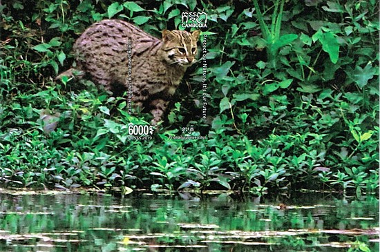 [Fishing Cat of Cambodia, Typ ]