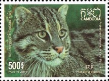 [Fishing Cat of Cambodia, Typ COY]