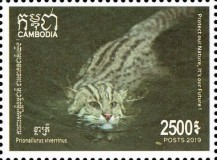[Fishing Cat of Cambodia, Typ CPC]