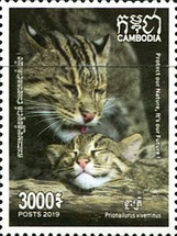 [Fishing Cat of Cambodia, Typ CPD]