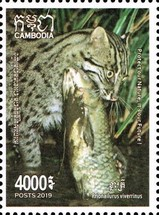 [Fishing Cat of Cambodia, Typ CPE]