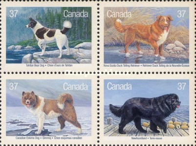 [Canadian Dogs, Typ ]