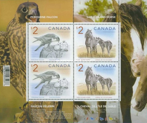 [Animals - Peregrine Falcon & Sable Island Horse, Typ ]