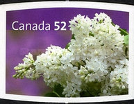 [Flowers - Lilacs - Self-Adhesive, Typ CMY]