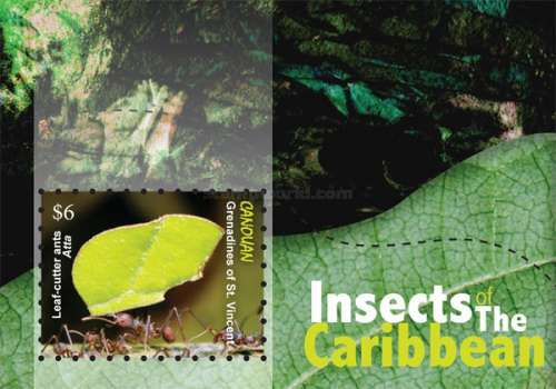 [Insects of the Caribbean, Typ ]