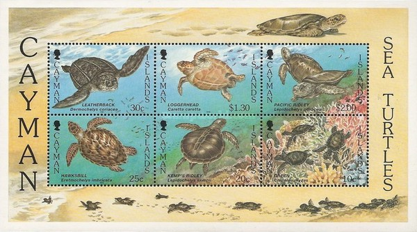 [Sea Turtles - Without White Frame, Typ ]